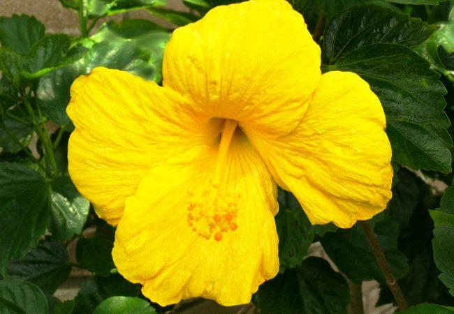 """10 Dinge, die Sie über """"Die Blume von Hawaii"""" wissen sollten"""